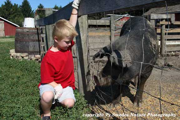 Checking out the pig at Living History Farms, Urbandale Iowa