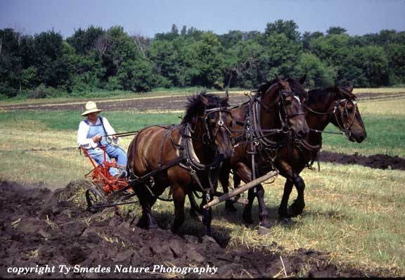 an introduction to the history of the farm life People who've liked my newest book, the bucolic plague, often write to ask what other books about farms or farming i recommend recently, the fabulous cnn's eatocracy blog asked me for my top 5 books about farming, so i thought i'd share here as well (while i heartily recommend barbara kingsolver.