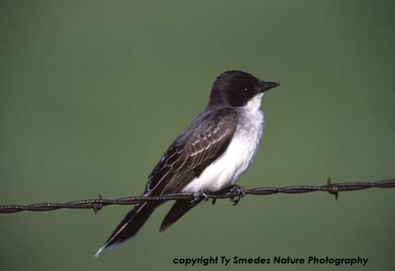 Bird Stock Images - North American