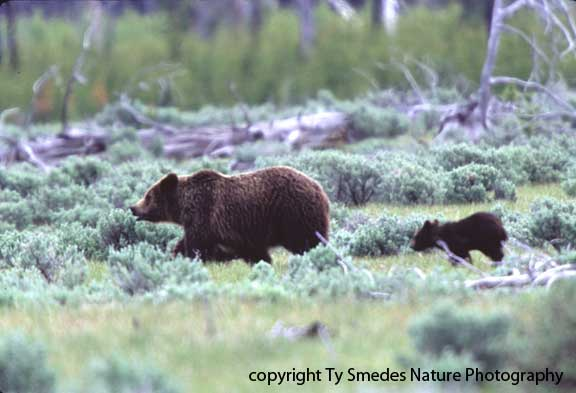 Grizzley and Cub